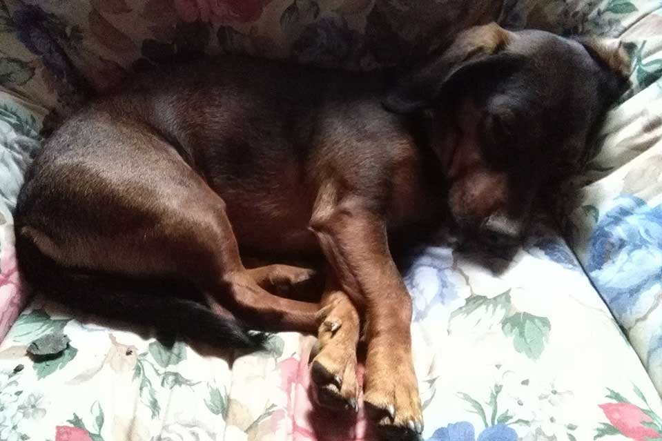Cane che dorme nella cuccia
