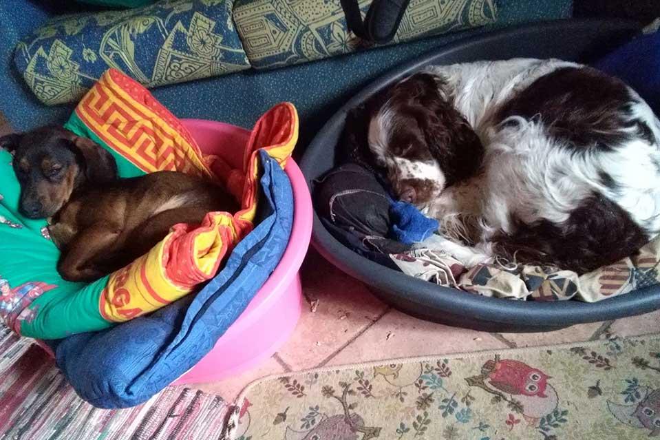 Cani che dormono